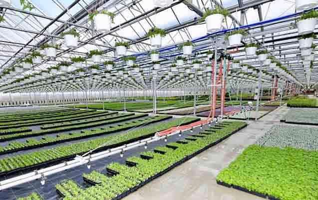 Topraksız Tarım Nasıl Yapılır? Maliyeti Kar Marjı?