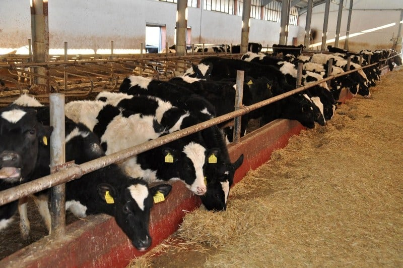 Hayvan Çiftliği Açmak İçin Gerekli Prosedür Nelerdir?