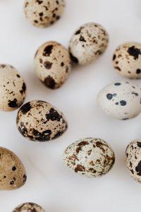 Bıldırcın Yumurtası Üretimi