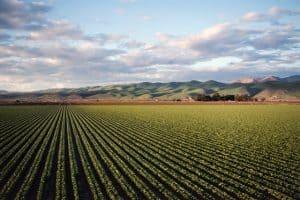Ekonomik Getirisi Yüksek Tarım Ürünleri